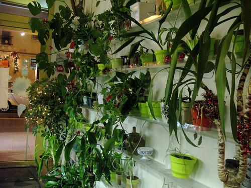 plant wall at veggie restaurant