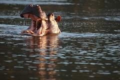 Hippo Sundowners, Malilangwe Dam