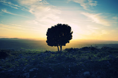 It's oh so quiet (kaneda99) Tags: sardegna sunset sky italy panorama cloud tree nature sunshine landscape geotagged island topf50 sardinia wind wide wideangle 123 321 albero isle isla kaneda serri santavittoria kaneda99 sigma1530mm alessandropautasso nikond700 wwwimnotabrandcom