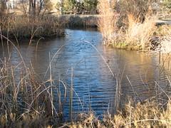 IMG_3916 (rabbit-rose) Tags: ducks migration snowgeese sacramentowildliferefuge