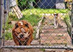 Cat vs Dog [ EXPLORED ] (AM Photography ) Tags: dog colors animals cat photo nice nikon compo fresh rambo