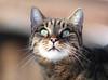 Princessin Domisia (arjuna_zbycho) Tags: pet cats pets cute animal animals cat austria österreich kitten feline chat kitty kittens olympus gato katzen haustier niederösterreich tier rakousko hauskatze domisia mywinners impressedbeauty