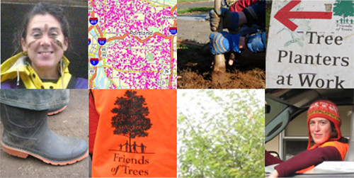 5,000 trees in four months