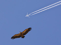 Air Traffic (Theophilos) Tags: blue sky airplane eagle greece