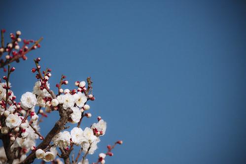 9475 : Plum2010#1 - On a sunny day-