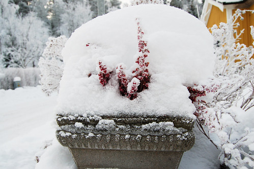 Pink details in snow (Photo by iHanna - Hanna Andersson)