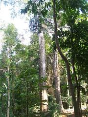 Tree Drop