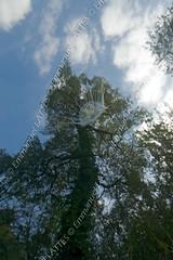 Mduse d'eau douce (Craspedacusta sowerbyi) dans la carrire de Beffes (18320, France). (Emmanuel LATTES) Tags: lake france tree green swimming plane river nager fly pond jellyfish underwater sting under floating lac bluesky surface vert rivire transparency transparent tentacle medusa arbre gelatine gracious transparence freshwater tang branche sous watery cnidarian cielbleu mduse planer flotter medusae gelatinous voler cnidaria naturalenvironment gracieux tentacule lowangleshot aquaticenvironment underwatershot eaudouce beffes urticante craspedacustasowerbii urticant vueencontreplonge milieunaturel cnidaire craspedacustasowerbyi sitedechabrolles cher18 carrireinonde milieuaquatique beffes18320 prisedevuesousmarine gelatineux
