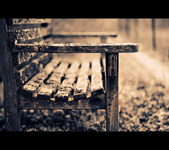 ~ Old Bench ~ (seat) (©Komatoes) Tags: park uk bench 50mm nikon f14 seat devon valley afs ludwell d40 ~oldbench~seat