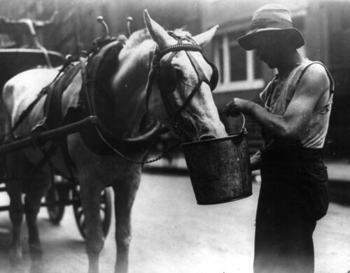 Man holding bucket up to horse