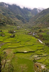 Banaue Hapao Terraces (lagal[og]) Tags: nikon banaue luzon d300 northernphilippines ifugaoprovince backpackphotography lagalog oggieramos