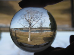 Looking Through My Crystal Ball (katerha) Tags: tree crystalball dailyshootds120