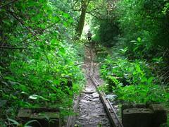 RIMG5989x1000 (Weltbummler) Tags: yerbabuena tucumn bosquenublado nuboselva