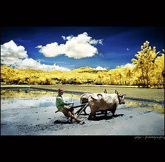 A Piece Of Morning#5 (yoga - photowork) Tags: morning sky panorama cloud mountains reflection tree nature canon indonesia lens ir photography 350d wideangle v3 canon350d infrared farmer 1022mm landscapephotography inspiredbylove efs1022mmf3545usm morningactivity trasognoerealtà beautifulindonesia visitindonesia