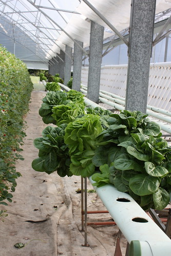 Ricardoes Farm