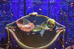 Aquarium ATLANTIS Hotel Dubai (SAM OMAN) Tags: fish aquarium hotel dubai gulf uae palm atlantis الخليج دبي الامارات aquaventure emarates jumera