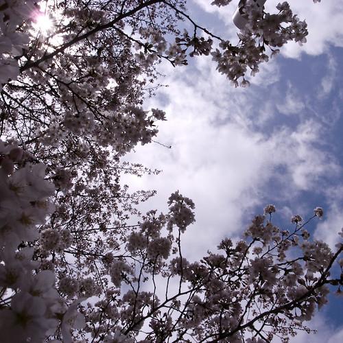 Cherry Blossom Sky Hole