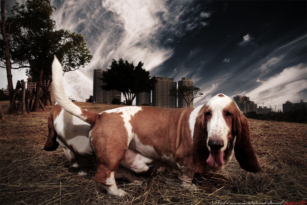 http://farm3.static.flickr.com/2747/4492800691_2e166262a4_o.jpg