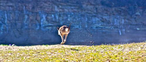 Pebbly Beach Kangaroos Australia - 201