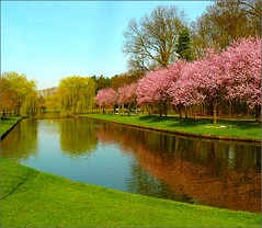 Japanese cherry trees along a pond (jackfre2 (on a trip-voyage-reis-reise)) Tags: pink blue trees sky people green water cherry pond getaway willow antwerp weepingwillow mechelen outskirts cherrytrees strollers vrijbroekpark japanesecherrytrees mygearandmepremium mygearandmebronze mygearandmesilver ducksveryfar
