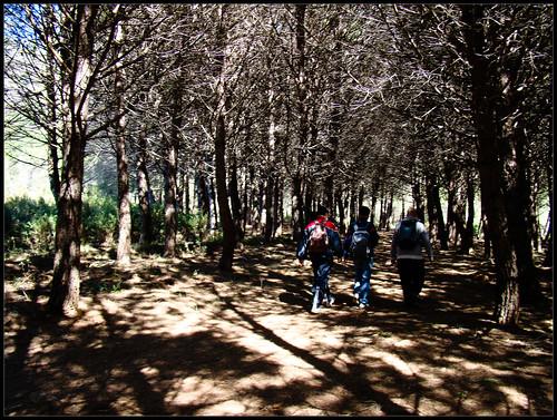 Ruta de Juanar - Istán (7)