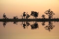 20090902 Okavango - Moremi 204 (blogmulo) Tags: africa sunset reflection canon landscape atardecer wildlife reserve delta paisaje reflejo botswana moremi 70200 2009 f28 okavango canon70200 canon450d blogmulo canonxsi