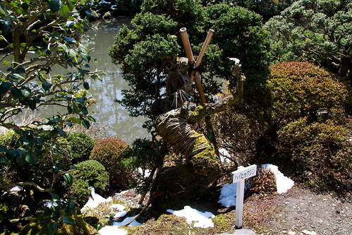 Nikko - detalle jardin