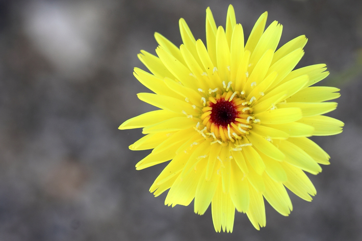 041610_flower10