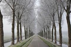 Winter Waterland 02 (boegheim_eu) Tags: landscape noordholland winter waterland trees