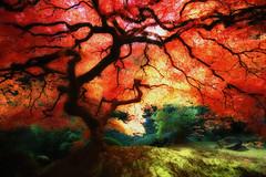 Japanese Maple Orton (KrissyAldous.com) Tags: red garden portland japanese maple thattree