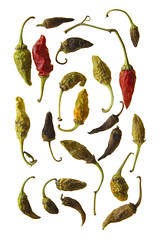 Ageing Peppers (The Glass Eye) Tags: october thessaloniki tribute 2009 irvingpenn macreaux