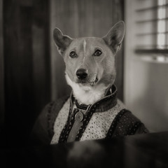 dogville (TommyOshima) Tags: portrait blackandwhite dog simon monochrome square 120film doctor basenji marcjacobs professor dogville escalatorcafe
