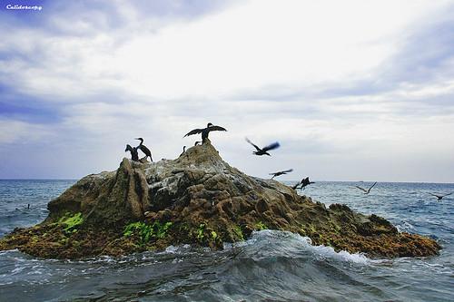 L'illot dels cormorans
