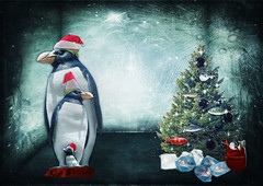 Family Penguin is waiting for Christmas... (by  JoesSistah...)