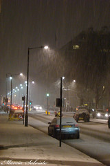 Heading home (Marcia Salviato) Tags: road uk greatbritain inglaterra winter england white snow cold london college branco frozen europa europe unitedkingdom freezing marcia exhibition neve londres gb imperial ru inverno frio imperialcollege reinounido h9 congelado icl exhibitionroad grabretanha congelando salviato marciasalviato snowandctree