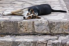 Che vita da cani... (Kalos eidos) Tags: dog cane stairs perro descansar tired resting stretched sicilia cansado sdraiato scalini scopello stanco peldaos riposare tumbados naturallyartificial