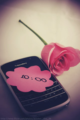 [ 77 / 365 ] (Muneerah Ibrahim) Tags: pink flowers roses black flower love rose canon project eos berry you days 365 40d