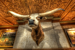 (mapaolini) Tags: longhorn portfolio hdr pictureframe driskell hdrworkshop hdrweekend