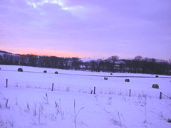 Winter farmland (Pankaj Kulkarni) Tags: winter frozenlake