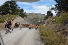 baudchon-baluchon-patagonie-sud-15