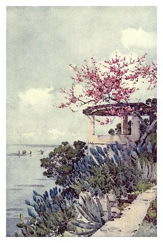 012-Plantas de orgullo de madeira y duraznero en flor-The flowers and gardens of Madeira - Du Cane Florence 1909