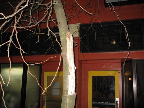 More local tree trauma: 1800 E. Burnside