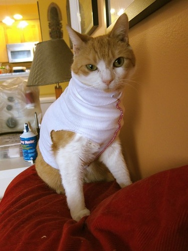 Jazz-playing turtleneck-wearing kitty