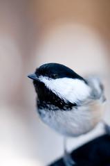 BirdWalk-18