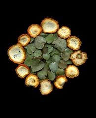24900 Citrus x tangelo, Eucalyptus (horticultural art) Tags: circle mandala eucalyptus citrus horticulture slices citrusxtangelo hortuculturalart