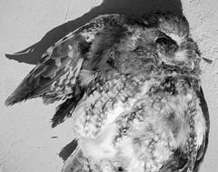 owl (CassieBrownPhoto) Tags: macro film 4x5 160vc largeformat kodakportra