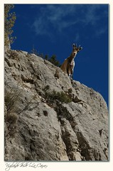 Vigilando desde lo alto de La Caixa (Hermes Almond Art) Tags: pentax gimp cabra teruel fras lacaixa caprahispanica k20d jafras hermesalmond