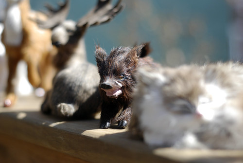 wild boar hair pet