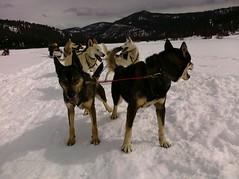 (Maggie Mason (Mighty Girl)) Tags: california lifelist tahoe dogsledding truckee mightylifelist
