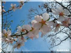 La belleza es relativa... (akel_lke ) Tags: espaa primavera a